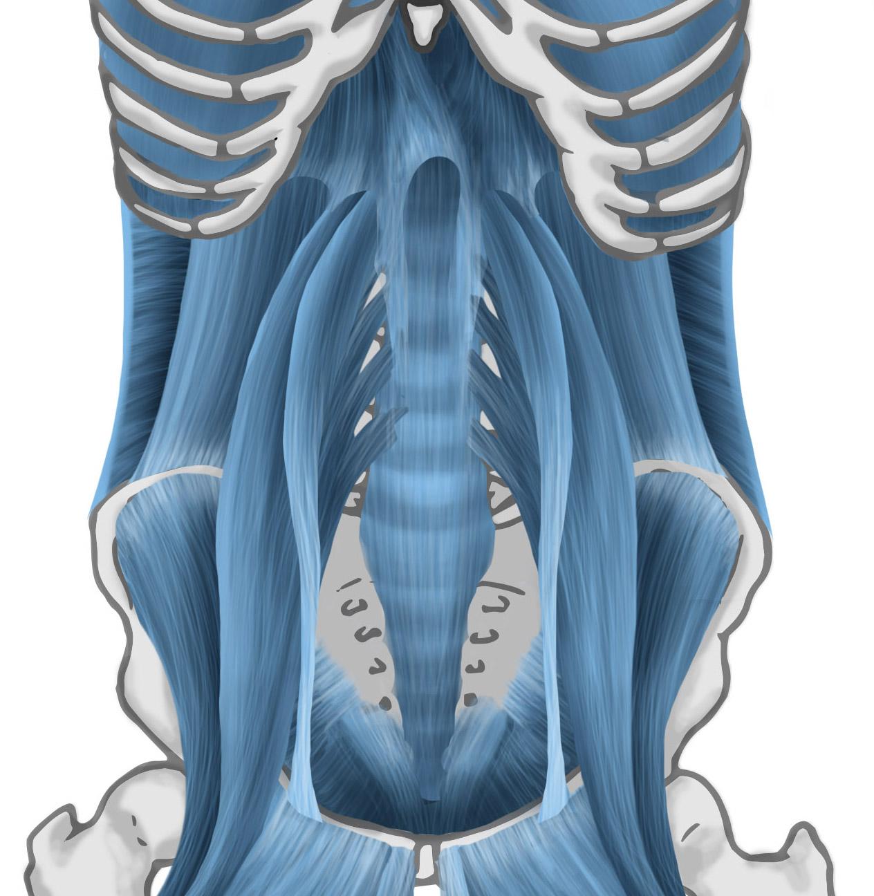 dfl-core-anterior