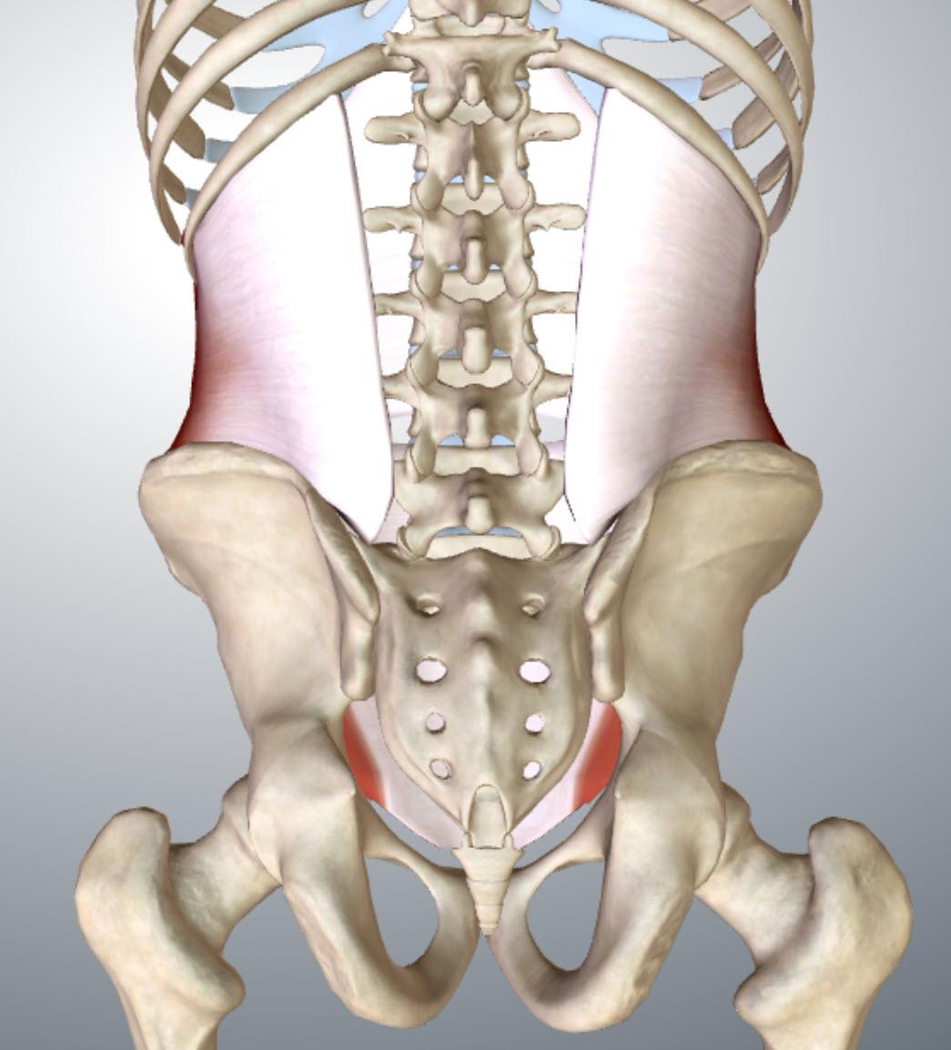 transverse-abdominis-back