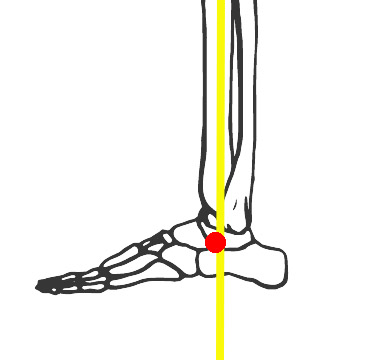 ankle-cog