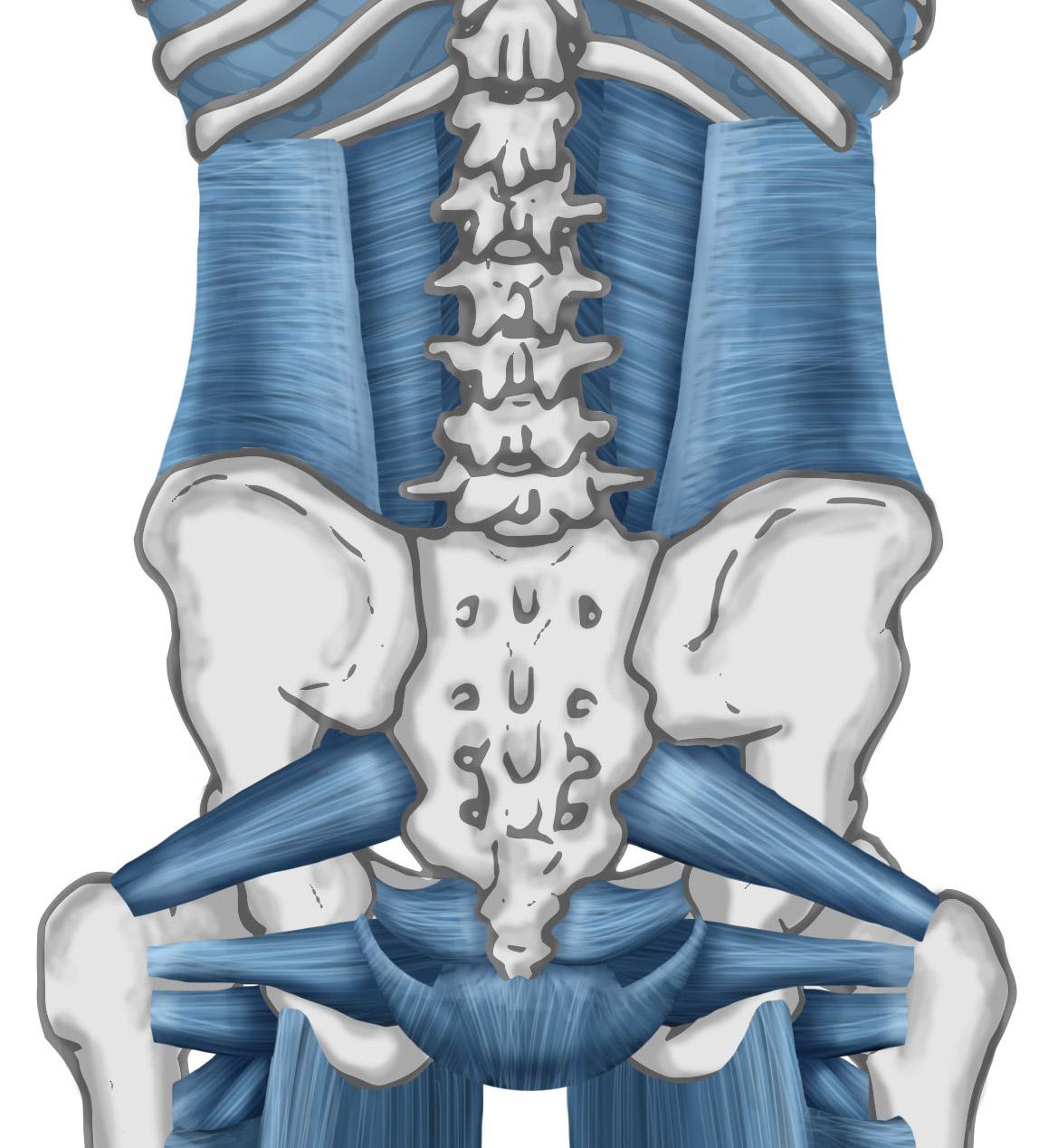 core-posterior
