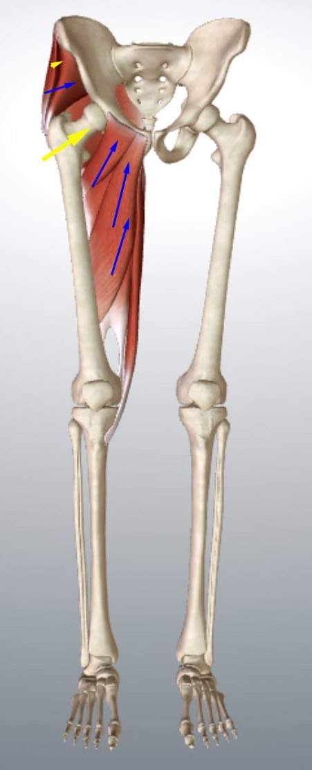 glutes-and-adductors