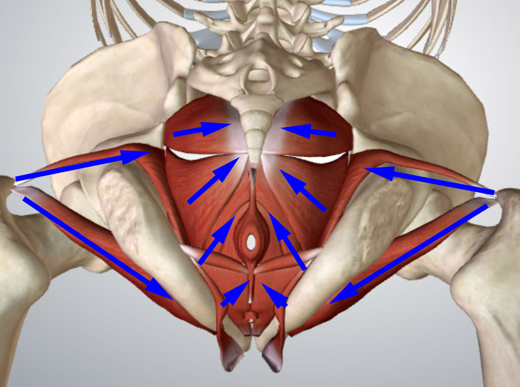 pelvic-floor-bottom-arrows
