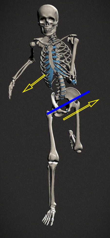 pelvic-sway-running