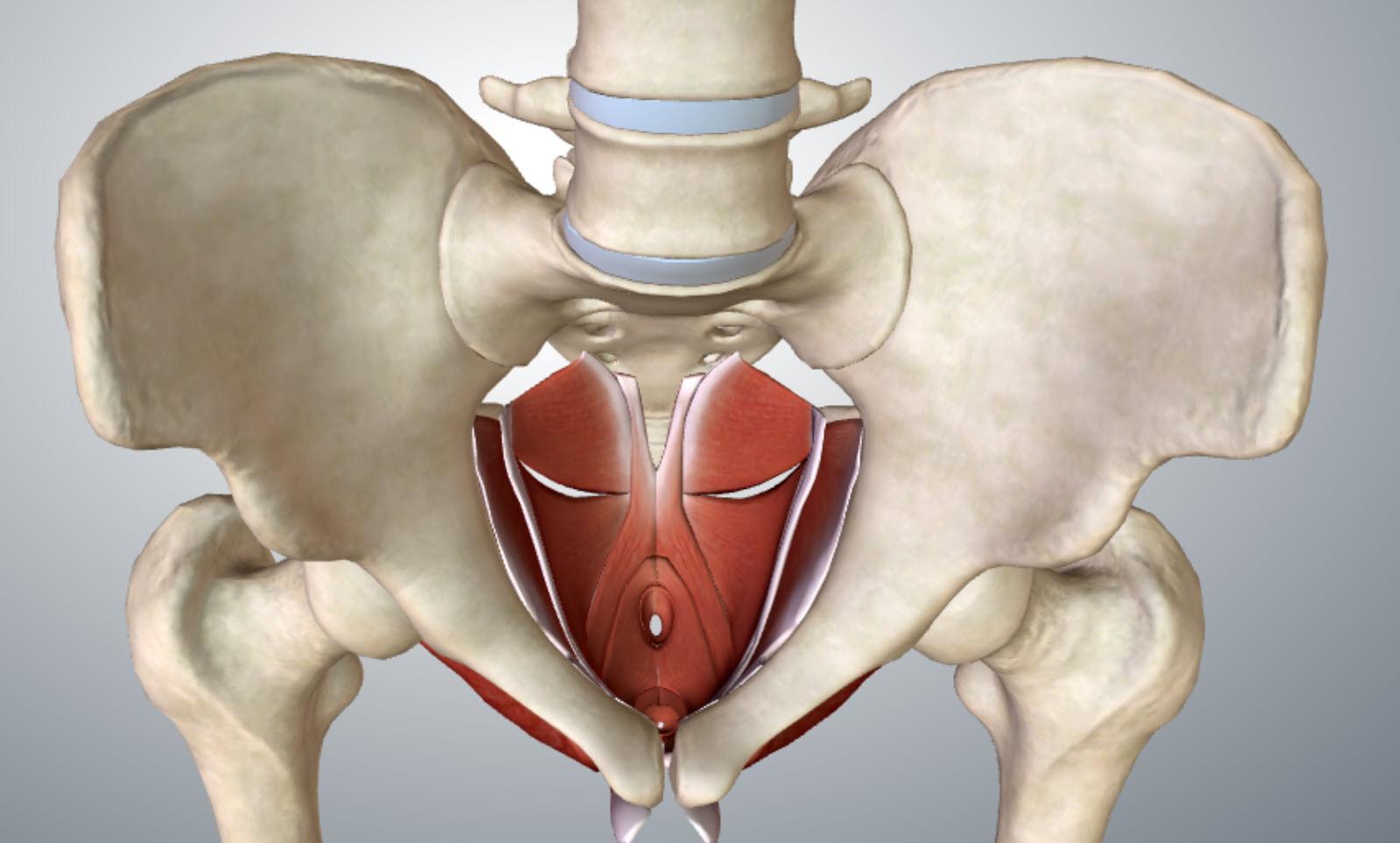 pelvis-floor-top