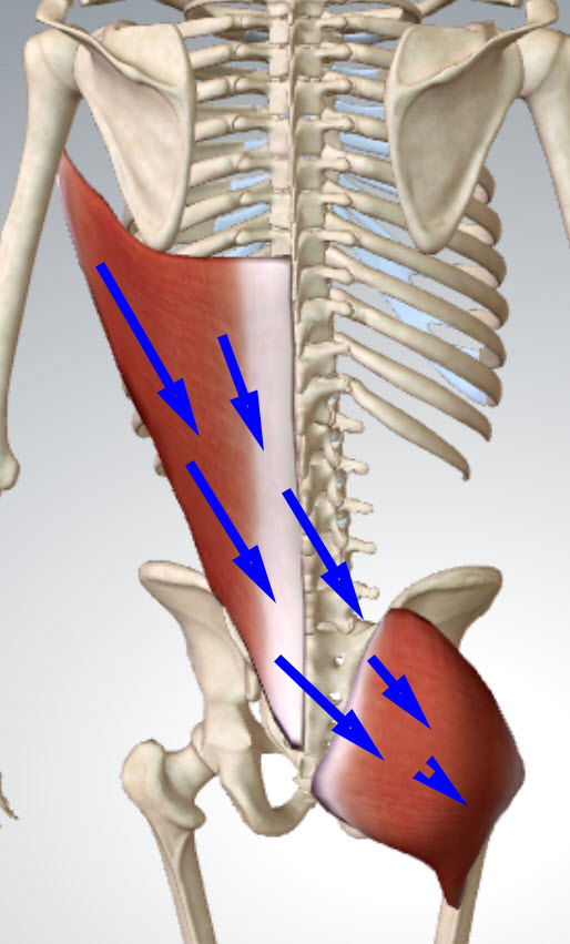 posterior-oblique-chain-with-arrows